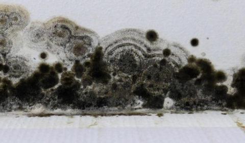 Comment Nettoyer moisissure noire peinture - Kom1Pro